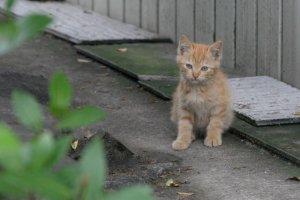ちょっと外れたところにいた子猫