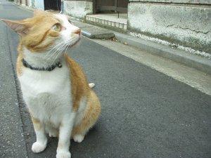 近所で評判の美猫 ^^