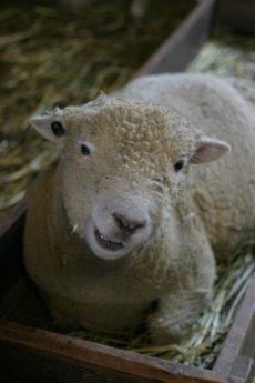 羊さん、kaze撮影