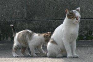 親子猫、kaze撮影
