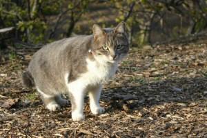 狩りの途中の美猫さん