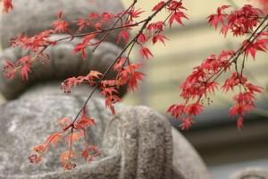 春に紅葉しているモミジ
