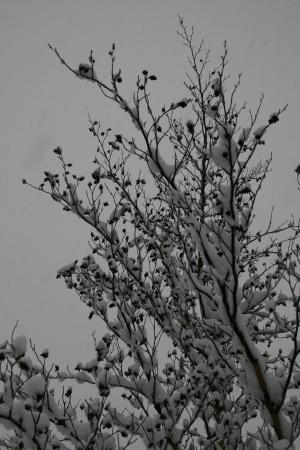 雪と百日紅