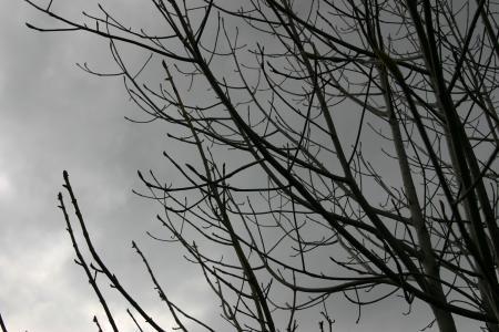 朴の木と栃の木