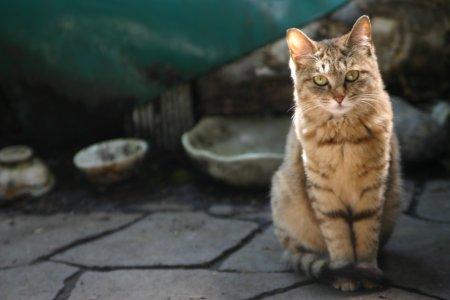 野良猫ポッポ