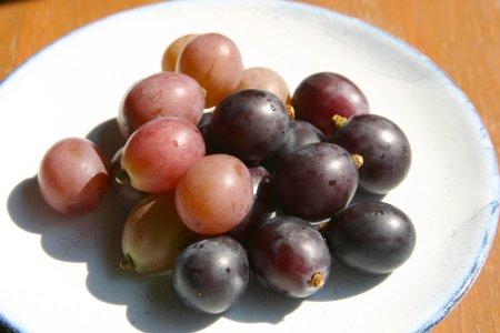 近所の葡萄