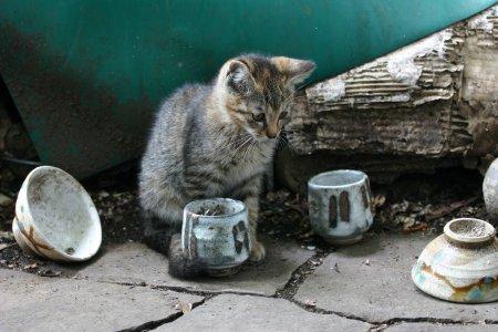 お茶碗遊び