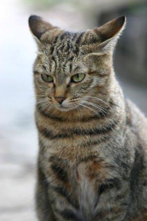 母猫チッポ