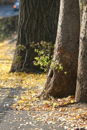 舗道の落ち葉