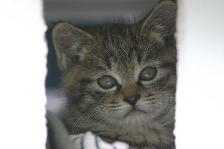 表情の可愛い子猫