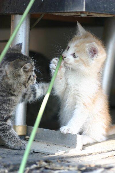 表情も動作も可愛い子猫