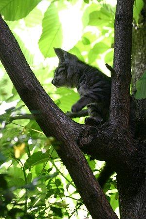 子猫の木登り