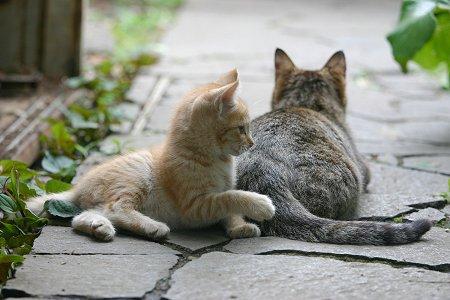 子猫のしっぽ遊び