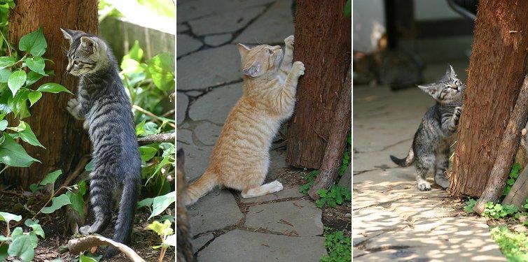 子猫の爪とぎ