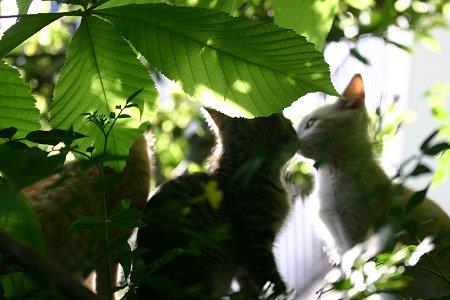 木陰の子猫