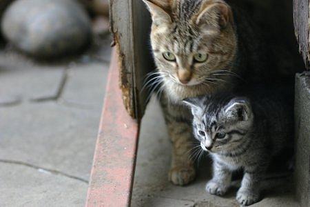 ママと一緒