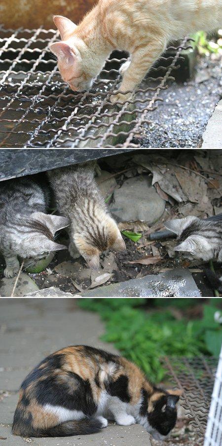 チビガエルに興味を示す子猫