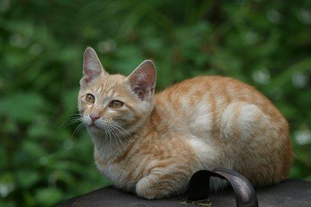 草木に囲まれた子猫