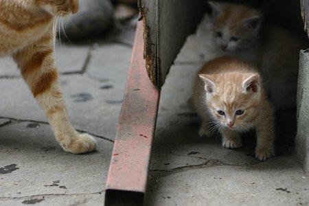 子猫のてん