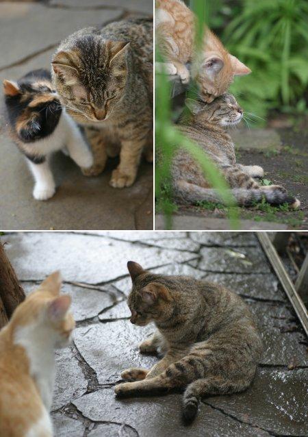 チッポと子猫、孫猫