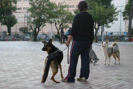 訓練中の犬と人