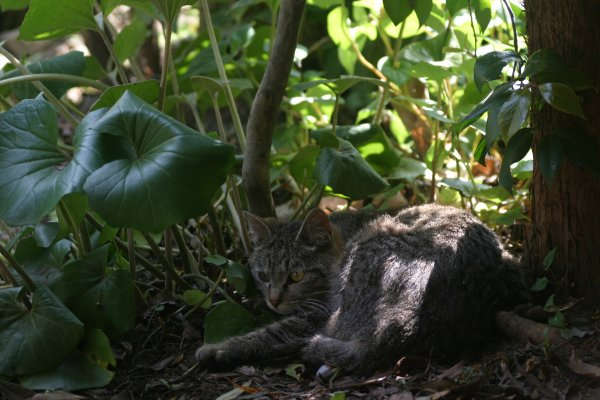 虫を見つめる猫