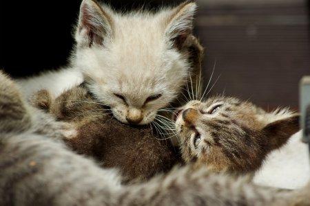 格闘する子猫たち