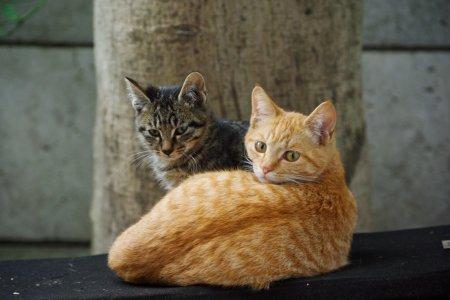 大きな子猫と小さな子猫
