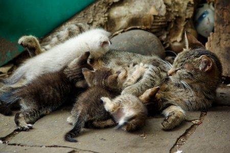 猫の授乳(ころん)