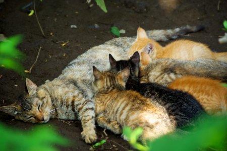 猫の授乳(すず)