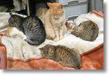 チッポの子猫たち