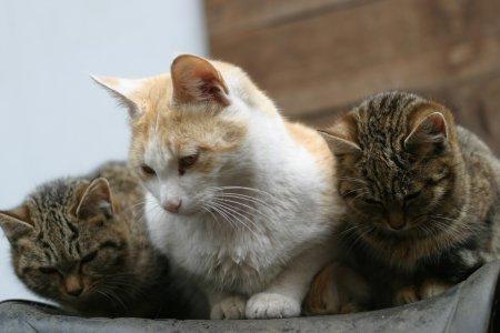 ぽんすけと子猫
