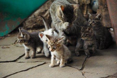 子猫の兄弟と母猫と