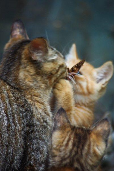 子猫にセミを与える母猫