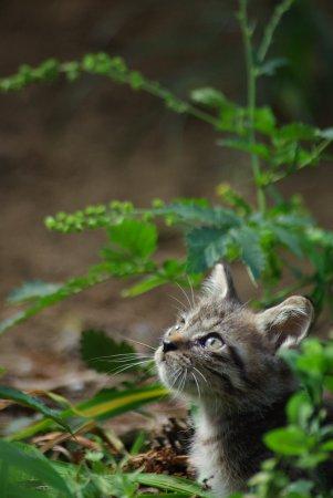 子猫と金水引