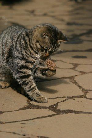 猫と松ぼっくり