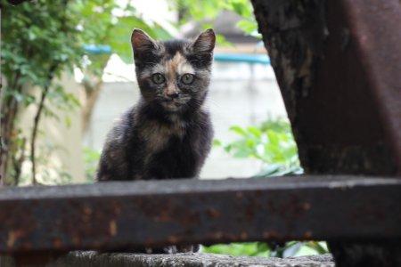 サビ猫とん