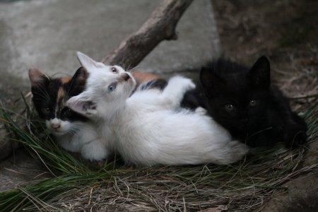 子猫3兄弟