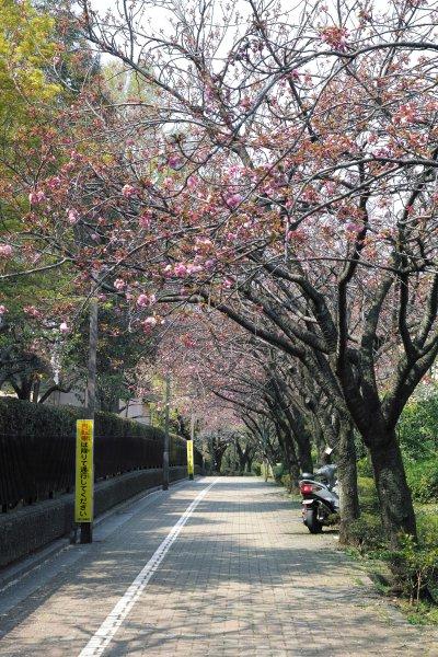 関山(カンザン)