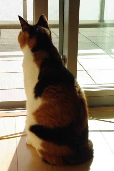 ベランダを見る猫