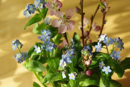 忘れな草と桃の花