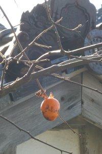 金沢の柿、kaze撮影