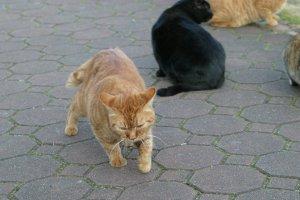 日比谷公園の猫さんたち、kaze撮影