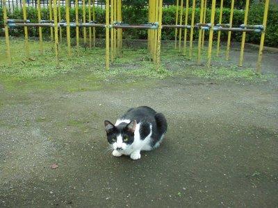 猫とジャングルジム