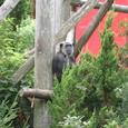07.チンパンジー ナオコちゃん